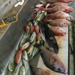snappers galore offshore gulf of mexico